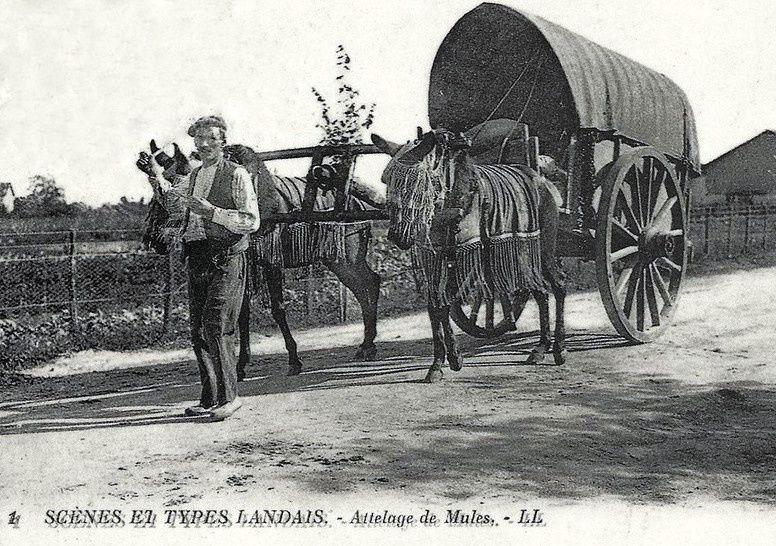 La mule et l'attelage au joug landais&#x3B;2° &quot&#x3B;Le joug à collier landais&quot&#x3B;
