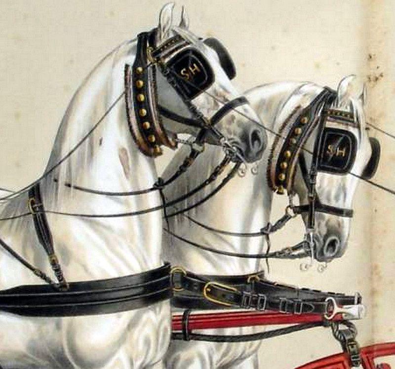 Brides chevaux de timon