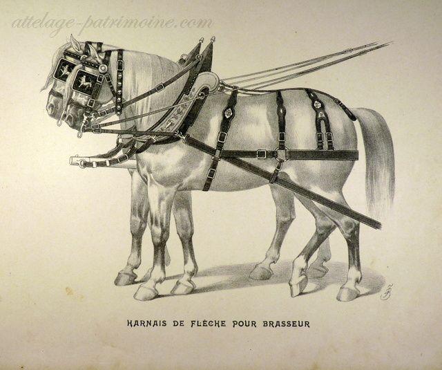 Album de la sellerie française 1900.