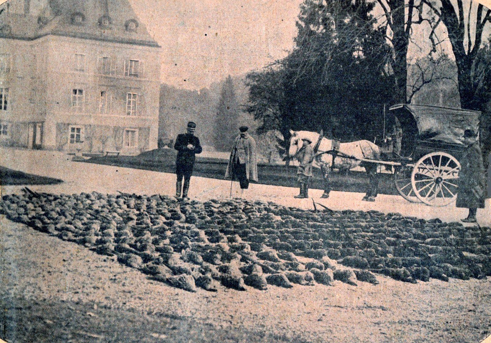 Tableau de chasse au château de Voisins (Yvelines) : 500 faisans tués en une après-midi chez le comte Frisch de Fels. Au second plan, une charrette à gibier. (La vie au grand air, 8 décembre 1901).
