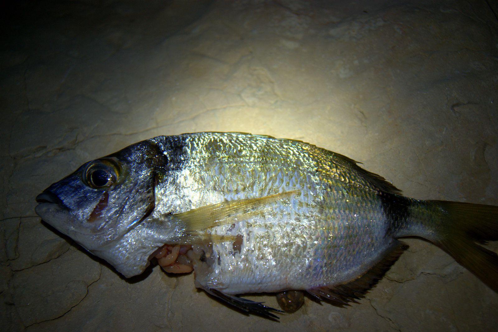 L'été des poissons.