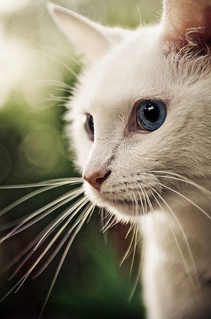 source : http://thisismycatblog.tumblr.com/post/18842142235/summer-cat-by-lulu-photo-on-flickr