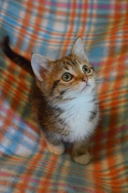 source : http://www.the-crazy-cat.com/2013/12/cat-plaid-two-things-i-love/