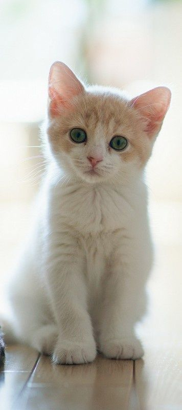 source : http://www.the-crazy-cat.com/2013/12/adorable-little-cute-kitty-looking-so-cute-click-on-picture-to-see-more/