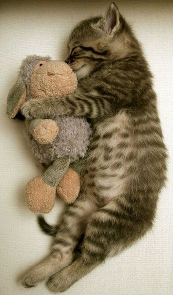 source : http://www.topito.com/top-chats-doudou et http://attackofthecute.com/on/?i=21890