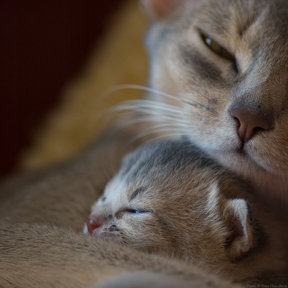 source : http://watchyourmuffins.tumblr.com/post/44630825735/a-mothers-love-photography-by-peter-hasselbom