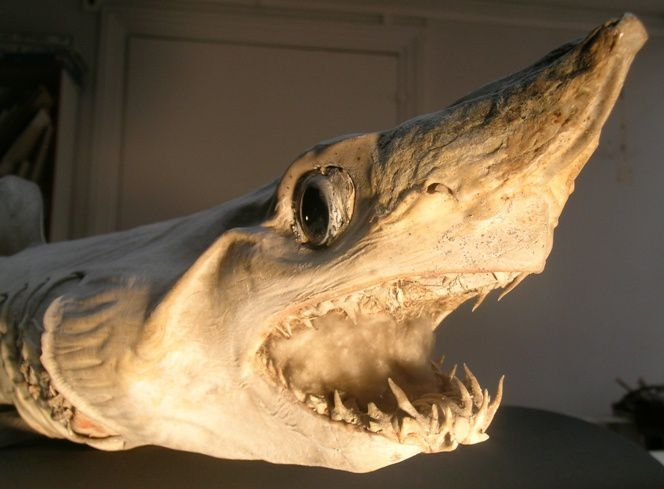 MENTON: EXPOSITION « LE REGNE ANIMAL ET NOUS - Musée de Préhistoire régionale