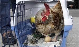 Royal Monaco Médecine: Le pire moyen de manger des œufs