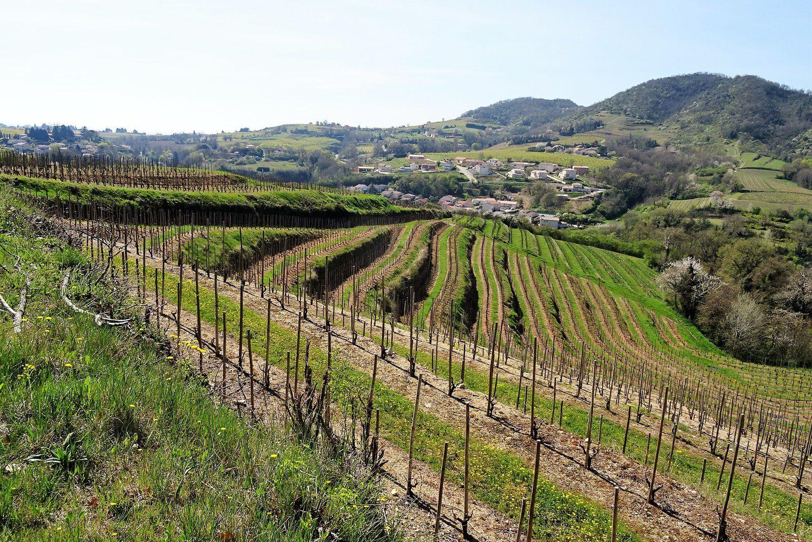et toujours des vignes, du bon Côtes du Rhône.
