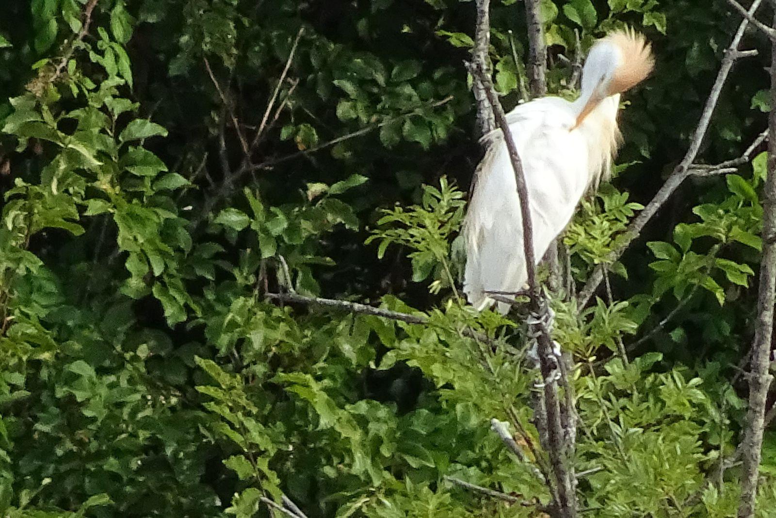 Pendant ce temps là, j'observe les alentours. Si quelqu'un peut me donner le nom de l'oiseau, merci.