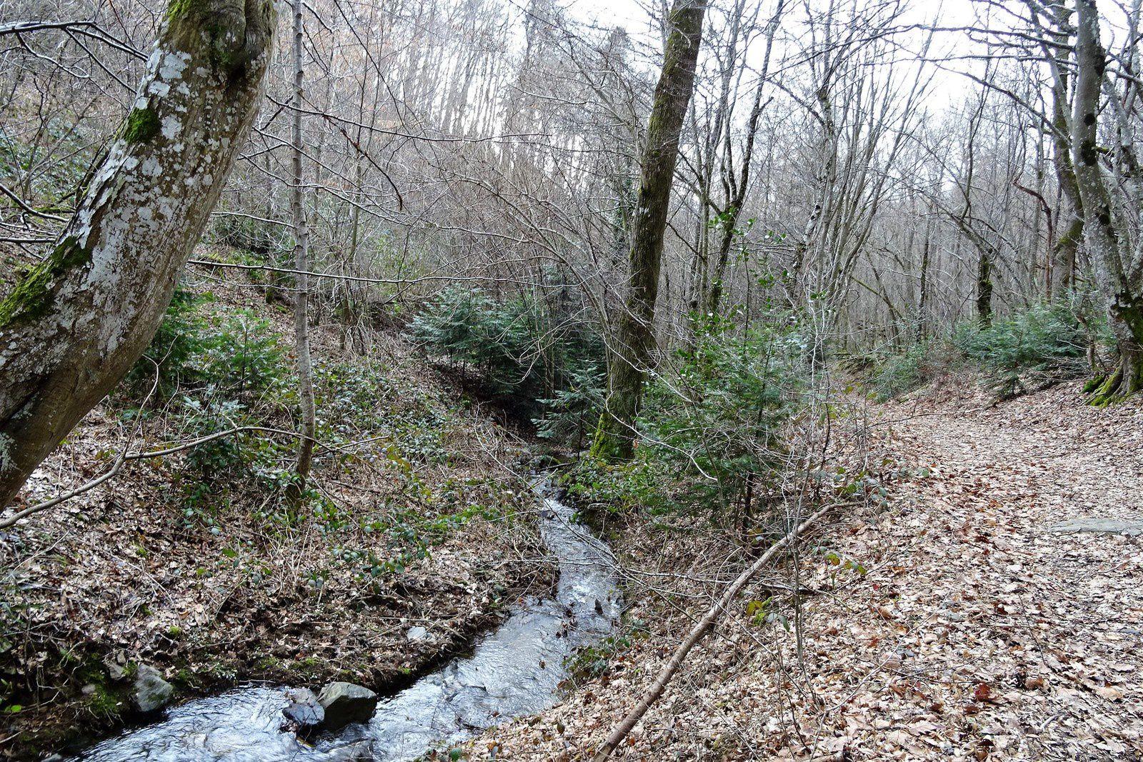 Nous voilà au bord du ruisseau, signe qu'il va falloir remonter.