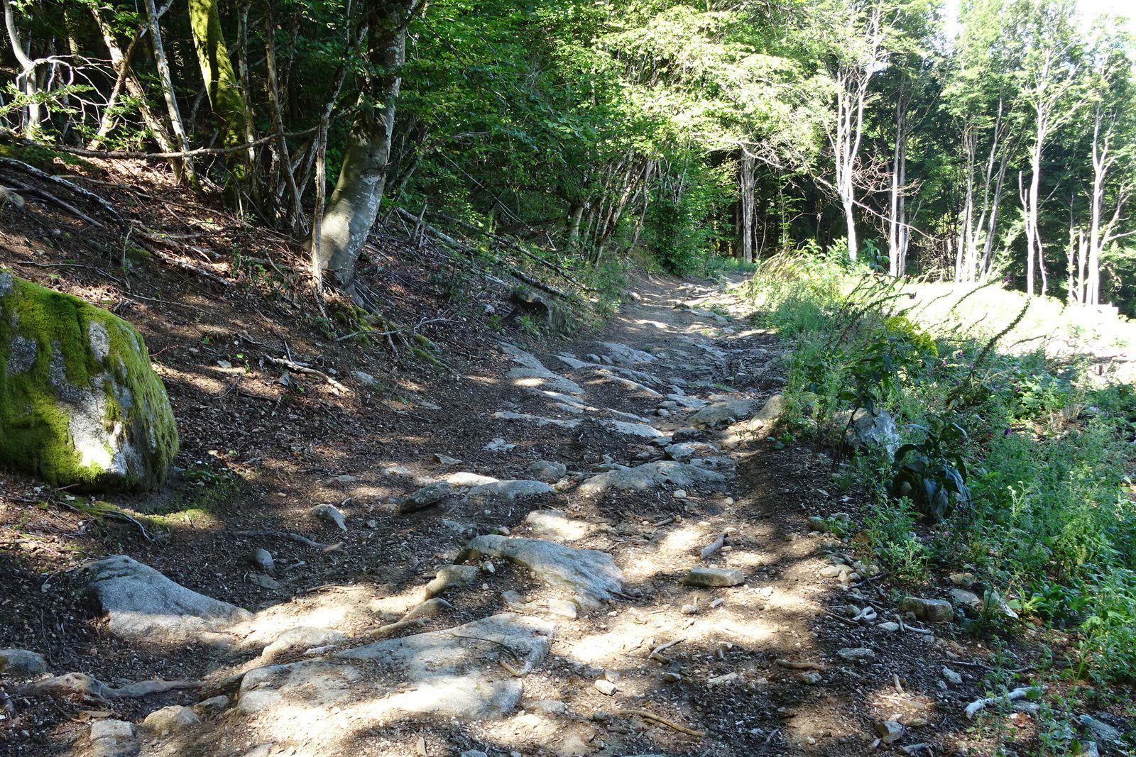 Sur les trois derniers kilomètres, les sentiers étaient mieux mais 3 sur 50 ce n'est pas assez !