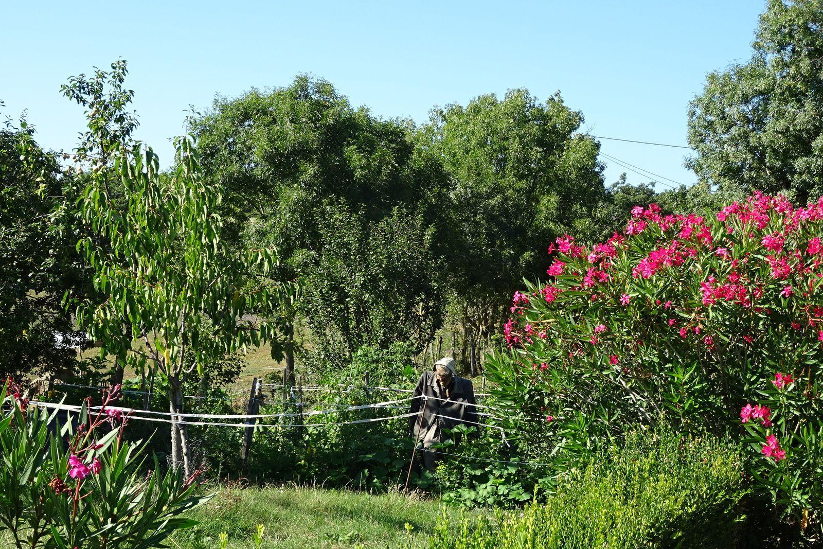 Nous sommes à 5/6 kilomètres du premier village au milieu de la nature. Nous nous réveillons au chant du coq. Dans la journée les cigales  prennent le relais.