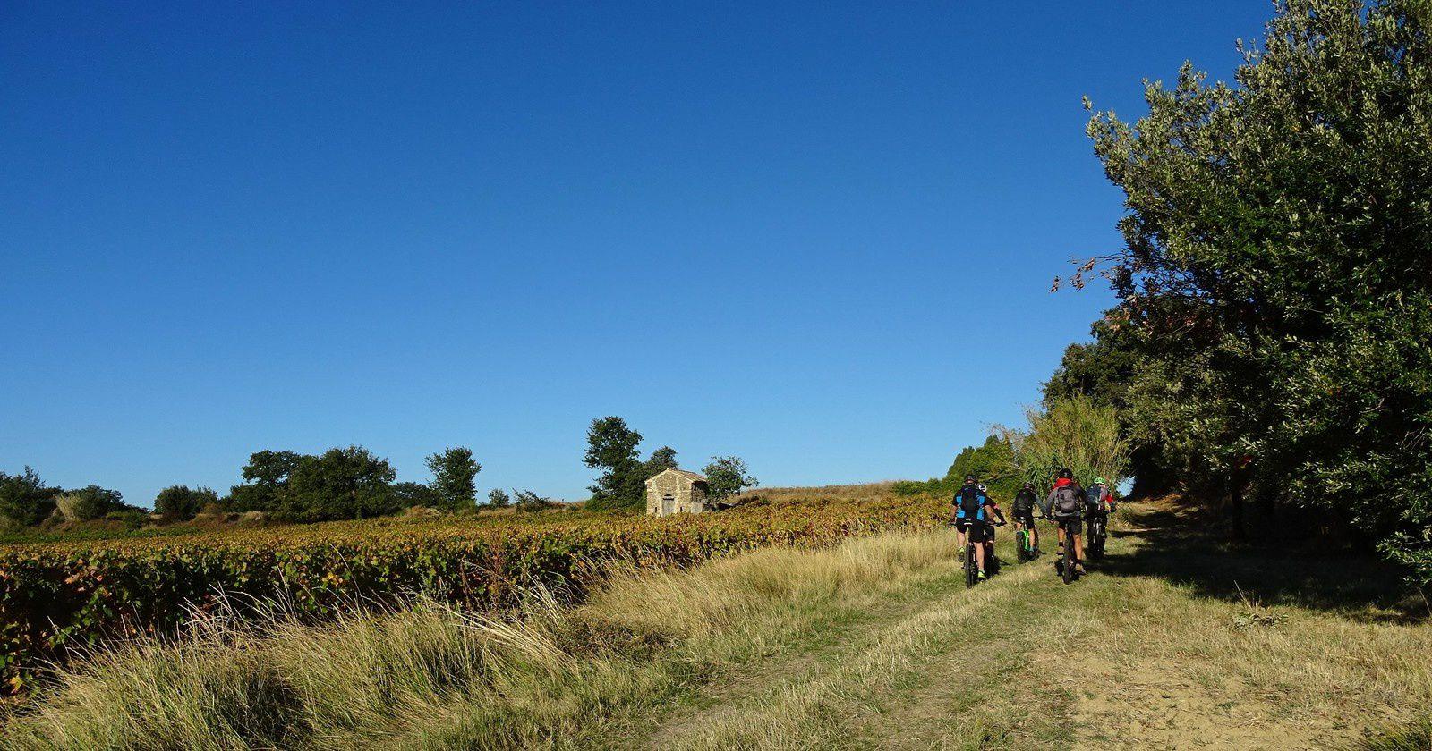 On passe au milieu des vignes.