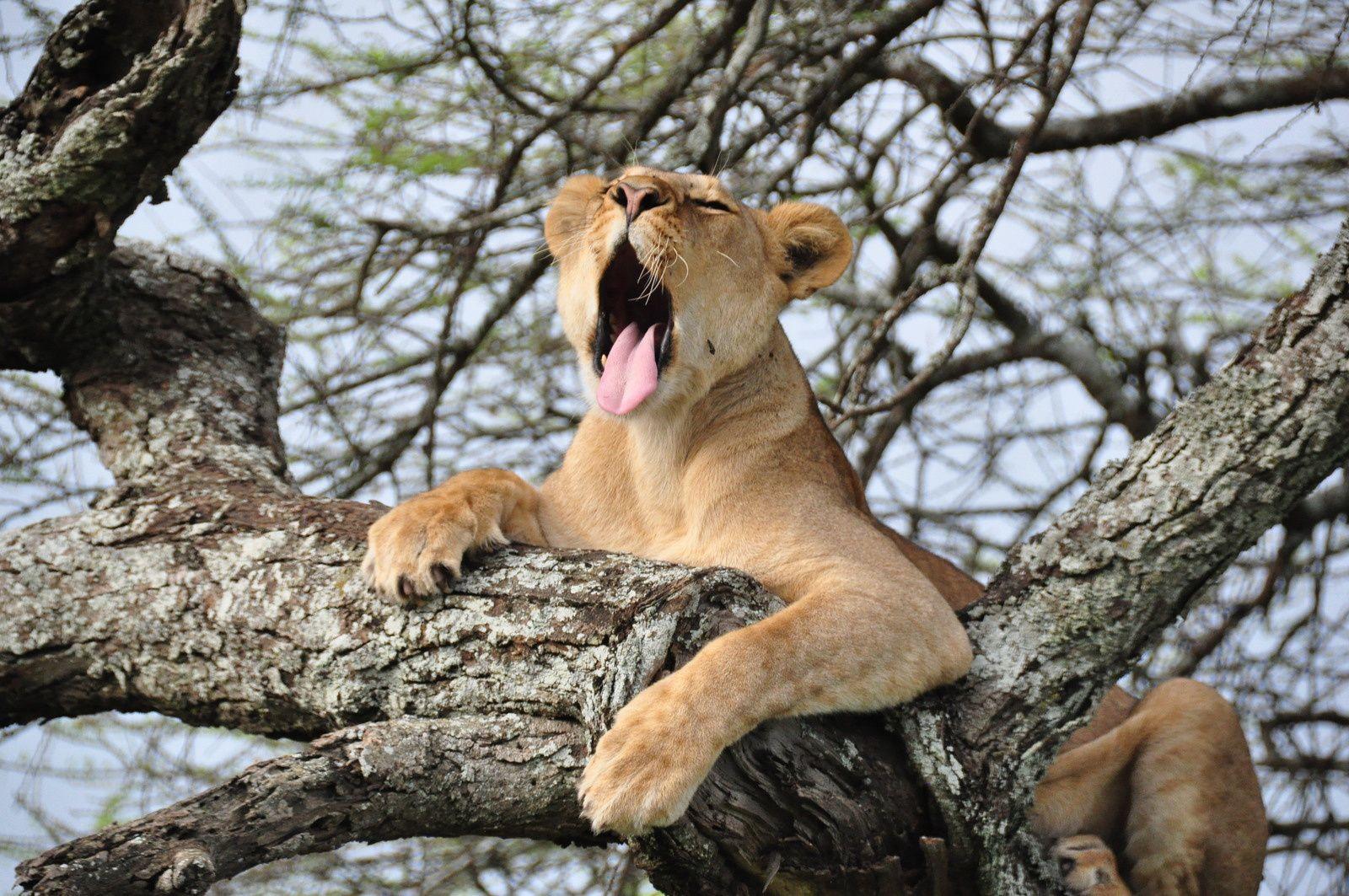 Réserve naturelle du Ngorongoro