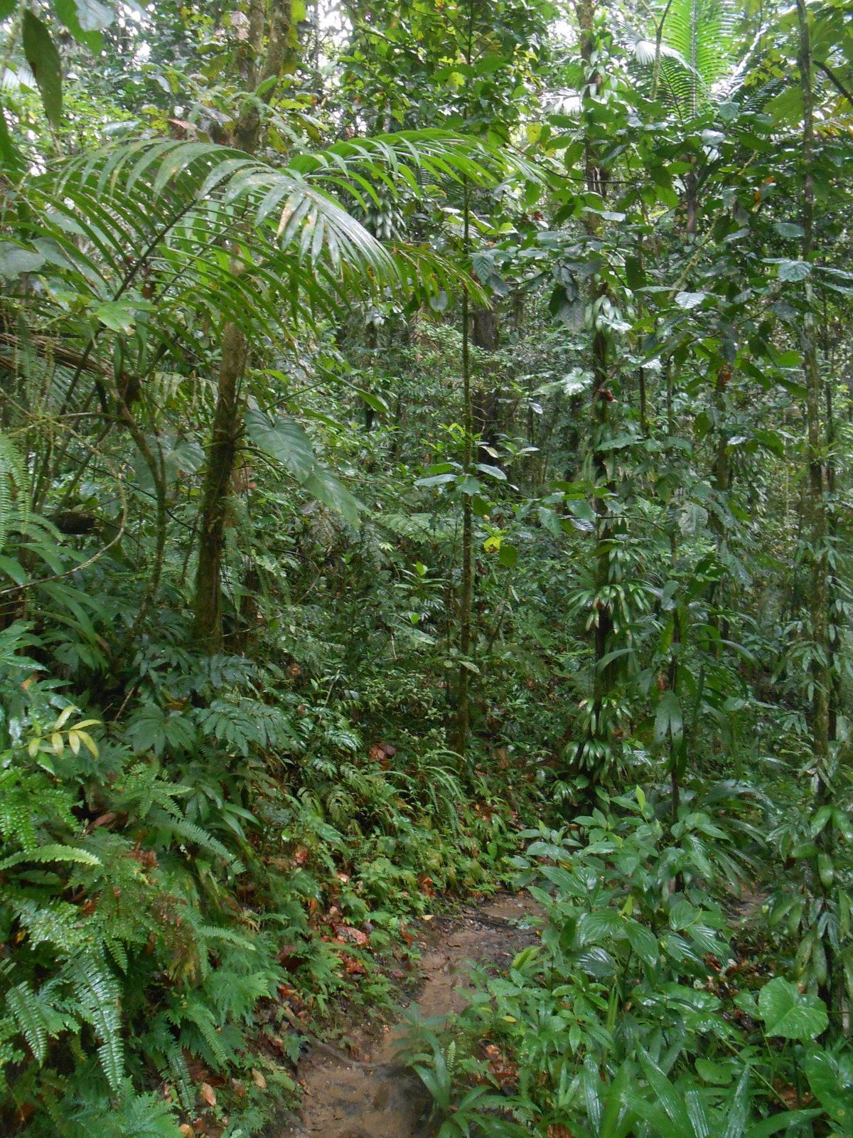 Parc National de Guadeloupe