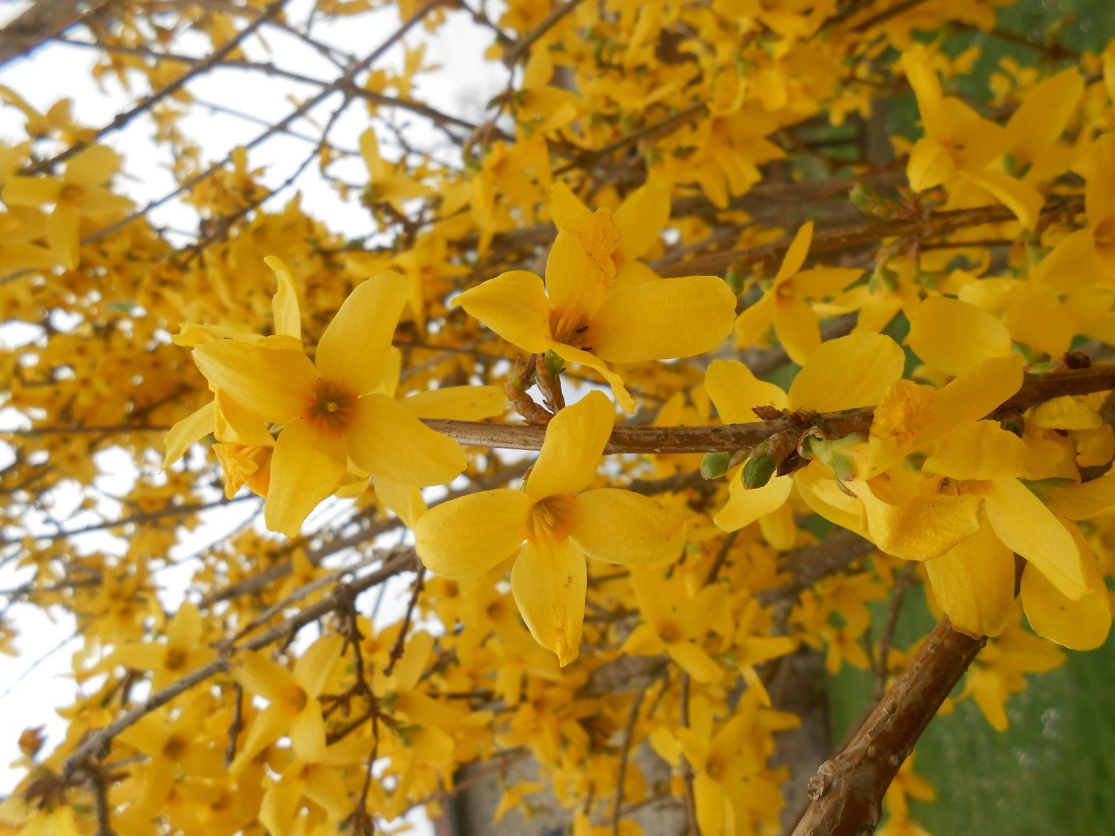 Le printemps arrive...les fleurs aussi!!!