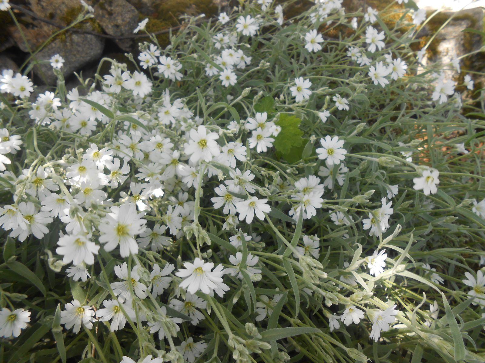 Oooh! les belles fleurs du mois de Mai!!