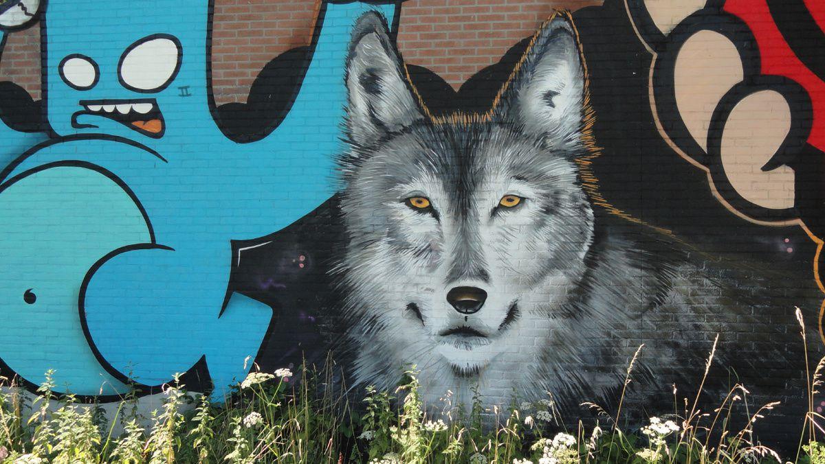Street Art : Graffitis &amp&#x3B; Fresques Murales 5615 Eindhoven (Pays Bas)