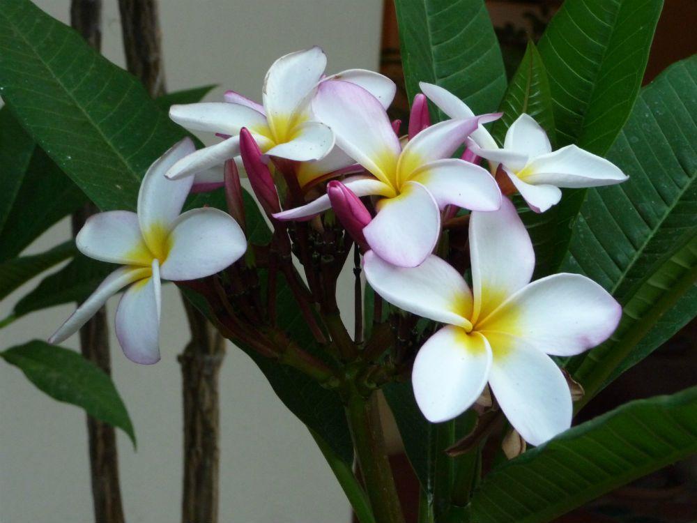 Opus #2 - #flowerpower2015 - ©bernieshoot