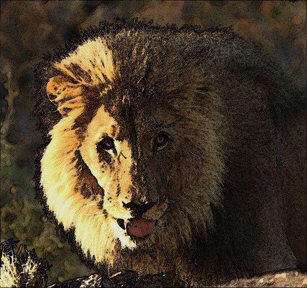 Lion Le roi des Animaux