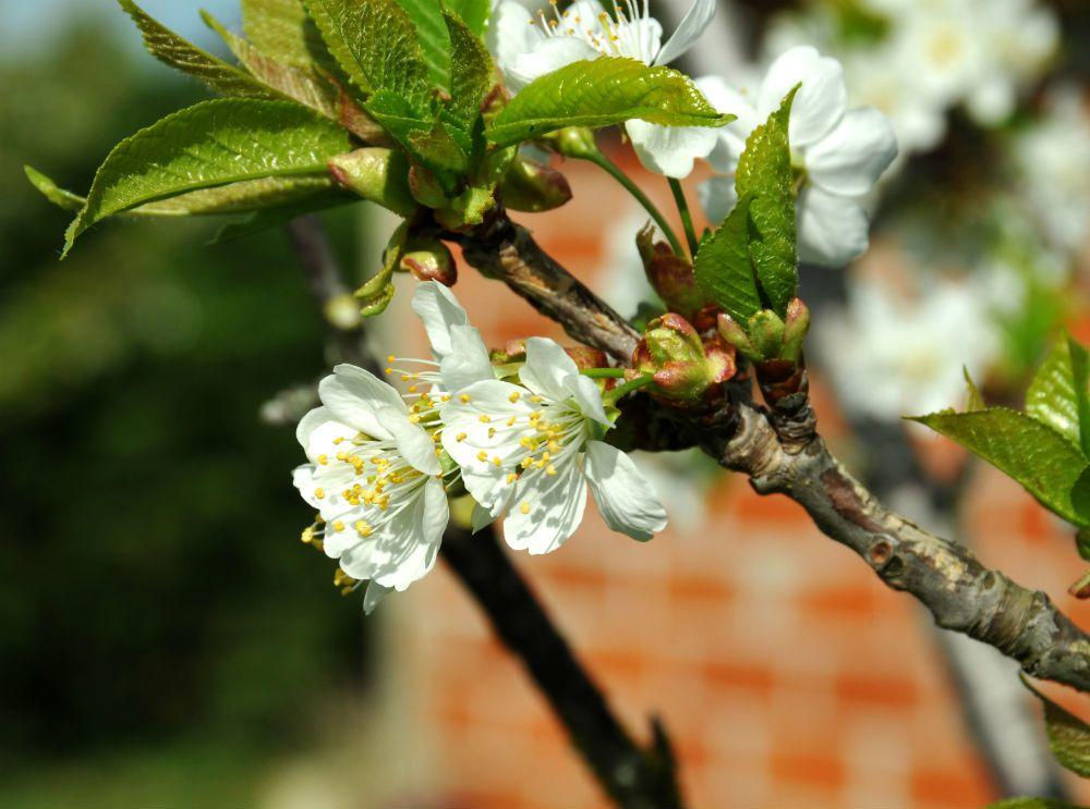 flower power pouvoir des fleurs groupe facebook
