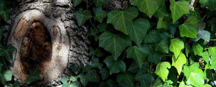 ... Gauchie dessus le tronc sur la branche peut naître la bourgeonnante issue où ton cœur va paraître ...
