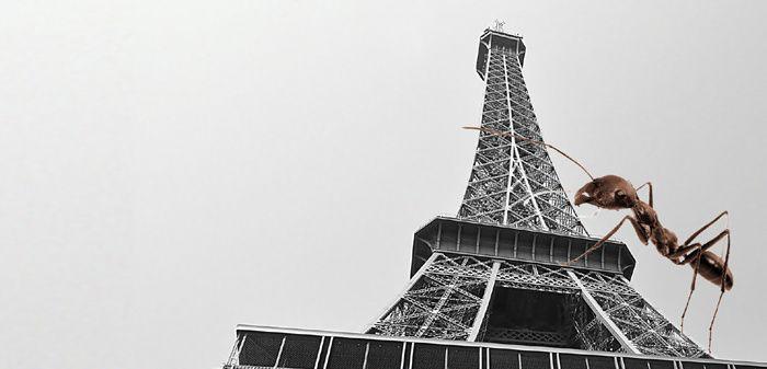 Fourmi de Paris