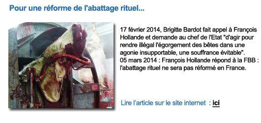 Fondation Brigitte Bardot : Actualités...