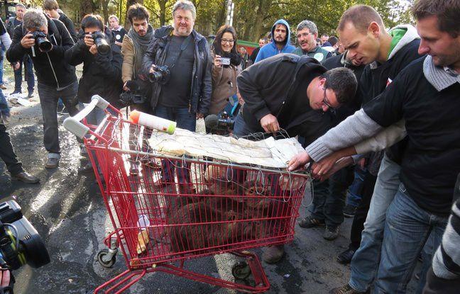 Les ragondins étaient entassés dans un caddie !