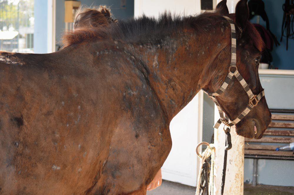 Activité poney à l'ex-zoo : des parents écrivent à la SPA