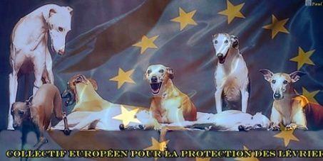 Un statut d'animal de compagnie pour les lévriers en Europe