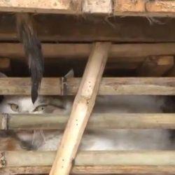 Au Vietnam, des milliers de chats tués après avoir été saisis par la douane