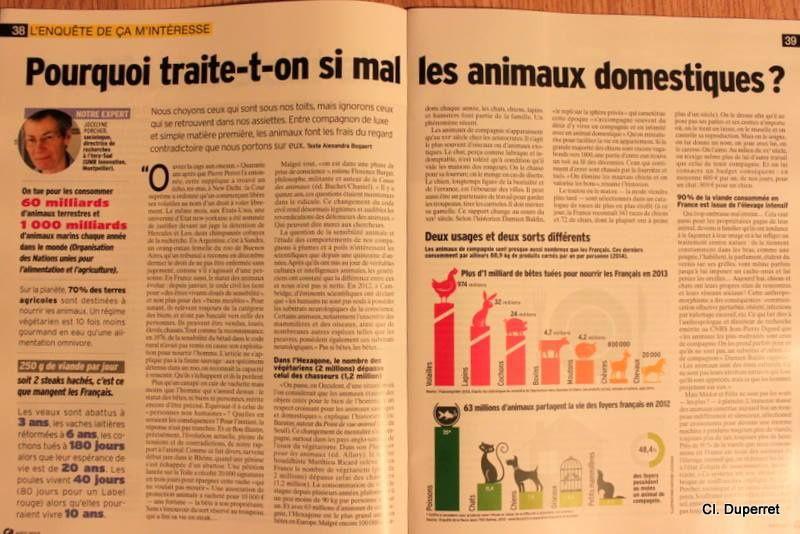 """Enquête dans """"Ca m'intéresse"""" n°414 de août 2015 : """"Pourquoi traite t-on si mal les animaux domestiques"""""""