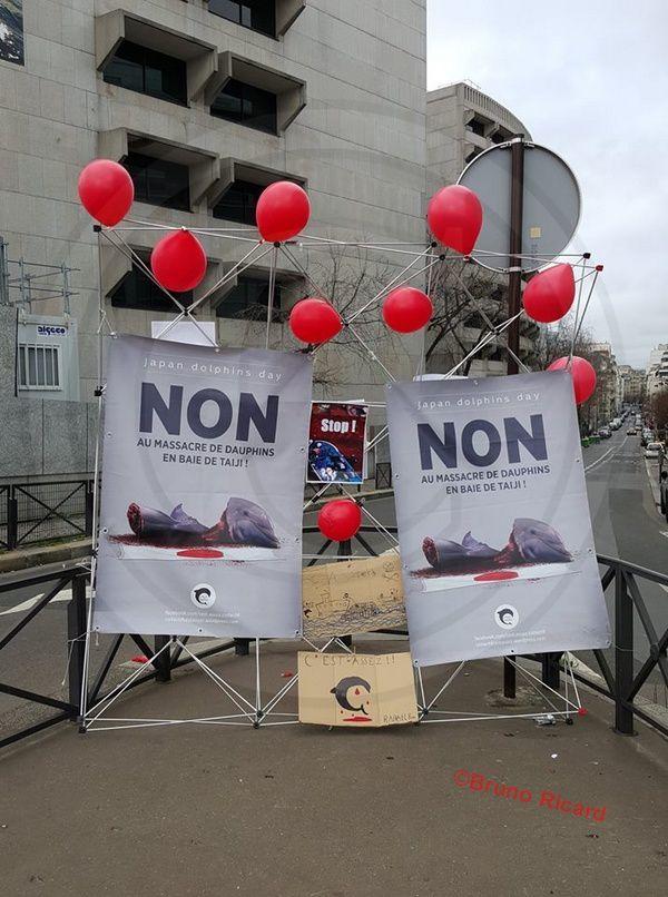 Baie De &quot&#x3B;Taiji&quot&#x3B; (Japon) Manifestation contre le massacre des dauphins aujourd'hui à Paris