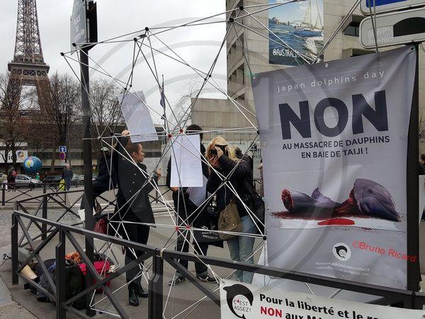 """Baie De """"Taiji"""" (Japon) Manifestation contre le massacre des dauphins aujourd'hui à Paris"""