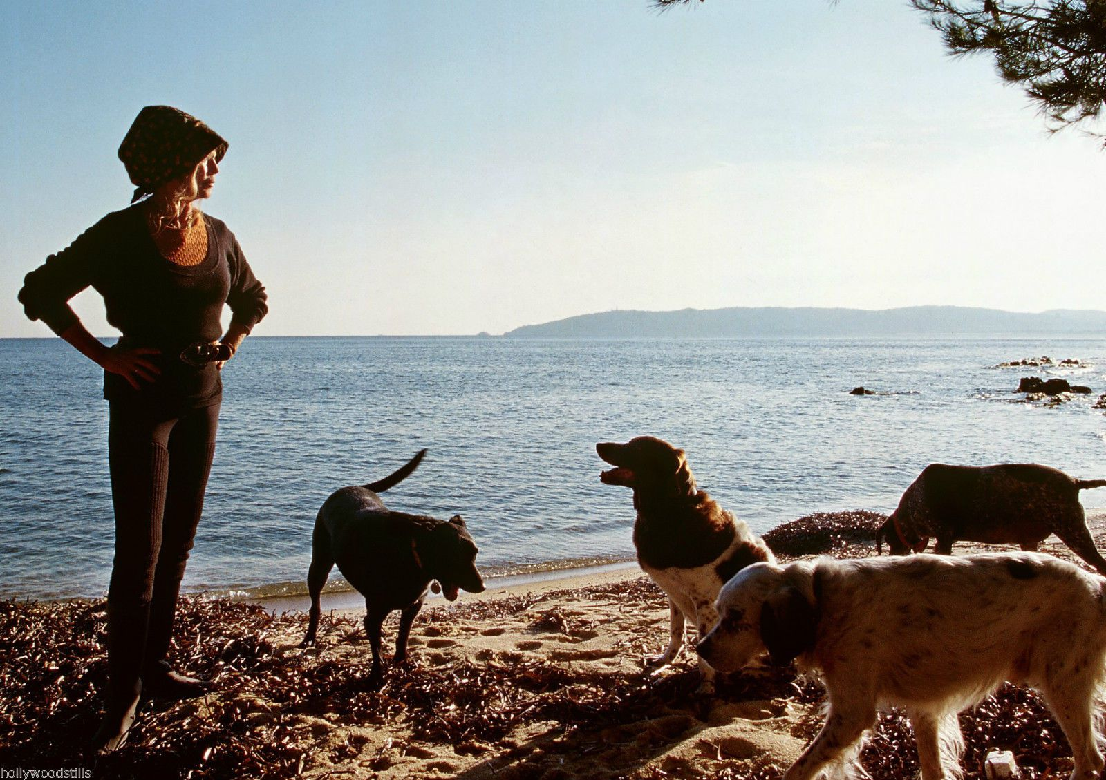 Ces déclarations fracassantes de Brigitte Bardot sur la cause animale