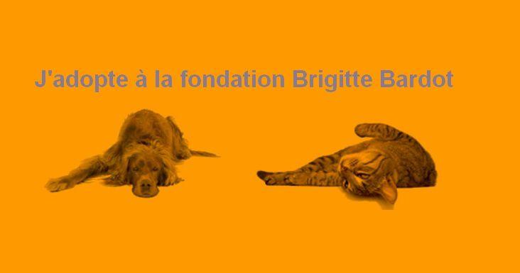 Brigitte Bardot : Adoptez à la Fondation...