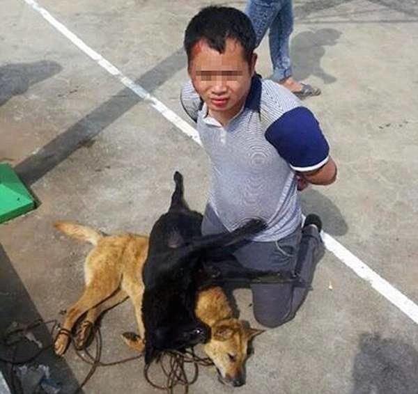 Des tueurs de chiens sont passés à tabac par des villageois chinois pendant plus de neuf heures.