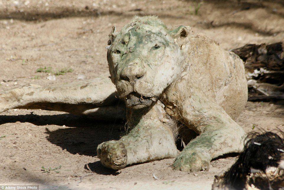 L'horreur dans le pire zoo du monde...