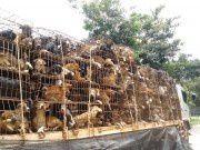 Thaïlande : adoptez les 12 chiens sauvés de l'enfer !
