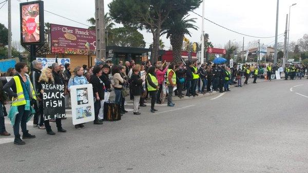 Le Marineland d'Antibes assigné en justice pour maltraitance