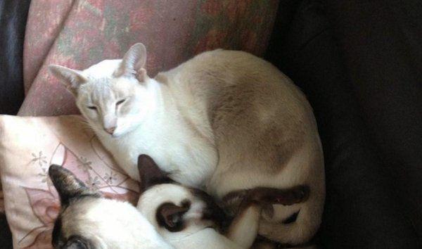 Royaume-Uni: Une chatte survit 8 jours dans un colis