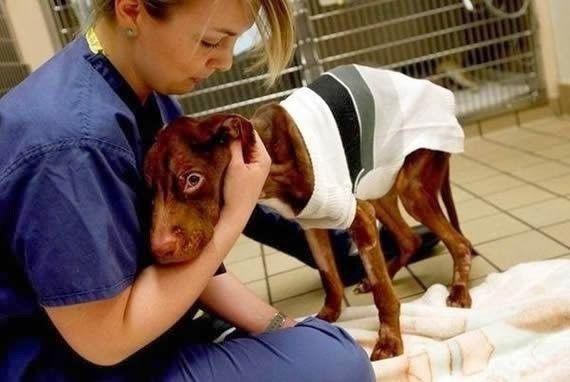 L'incroyable sauvetage de Patrick, le chien abandonné retrouvé mourant dans un sac poubelle