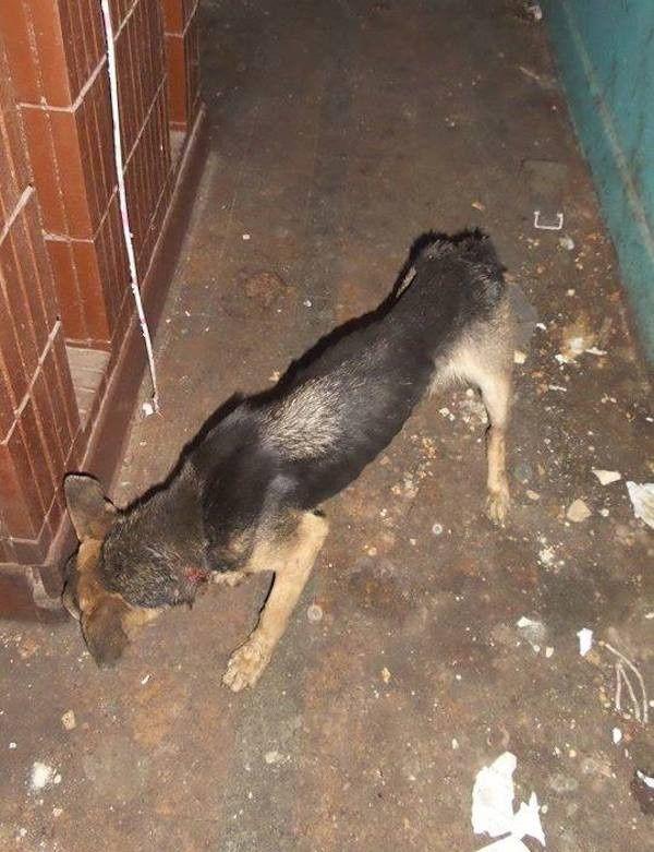 Enchaînée sur un balcon, cette chienne a tenté l'impossible pour se libérer