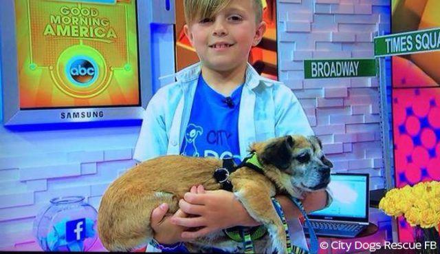 Pour son 9ème anniversaire, un garçon récolte 5800$ et sauve 10 chiens de l'euthanasie
