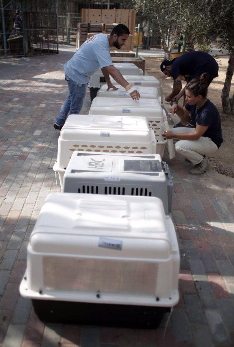 Les derniers animaux du zoo de Gaza ont été évacués