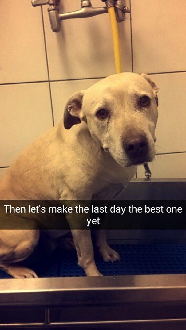 Dans un hommage poignant, elle photographie la dernière journée de vie de son chien