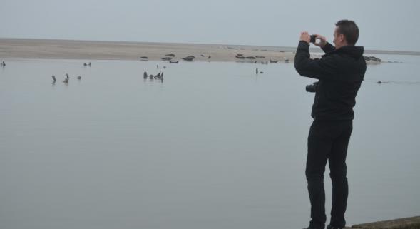 Les phoques suscitent bien des passions. Entre les pro et les anti-phoques, le torchon brûle.