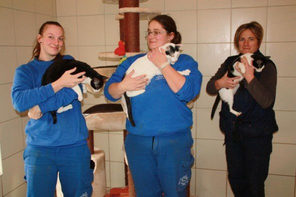 À Saint-Aubin-le-Guichard : Cinq chats rapatriés par la Fondation Brigitte-Bardot ont échappé à un triste sort